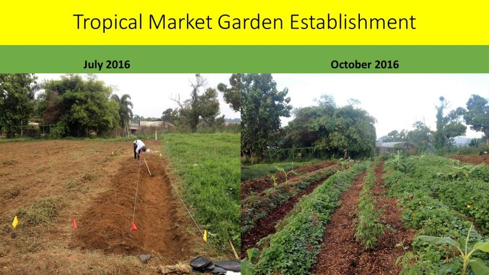 tropical-market-garden-establishment