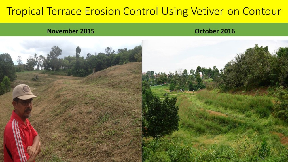 tropical-terrace-erosion-control-using-vetiver-on-contour